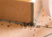 milingonat