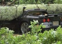 Image Trungu-i-pemës-bie-mbi-veturë-shoferi-shpeton-pa-lendime-foto-780x439-1-300x169.jpg